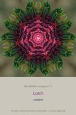 BachBlueten-imagami-19