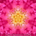 02-Heckenrose-6er