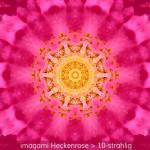07-Heckenrose-10er