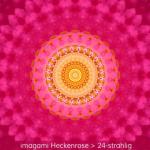 10-Heckenrose-24er