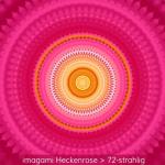 12-Heckenrose-72er