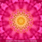 08-Heckenrose-11er