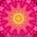 09-Heckenrose-12er
